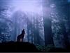 Jaco_Wolf's avatar