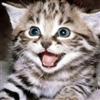 cheshirecats's avatar