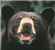 calmsea's avatar