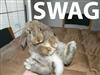 BunnySwagg's avatar