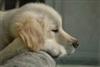 tiamodog's avatar