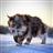 Akonji's avatar