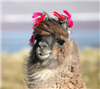 LamasNalpacas's avatar